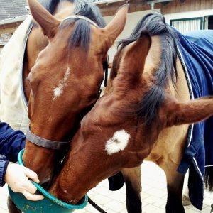 Futtermittel Pferd bei Reitsport Live