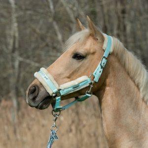 Halfter fürs Pferd bei Reitsport Live