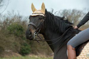 Gebisse und Kandaren | Pferd
