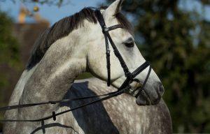 Trense kombiniertes Reithalfter | Pferd