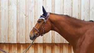 Trensen st-zaum-wb | Pferd